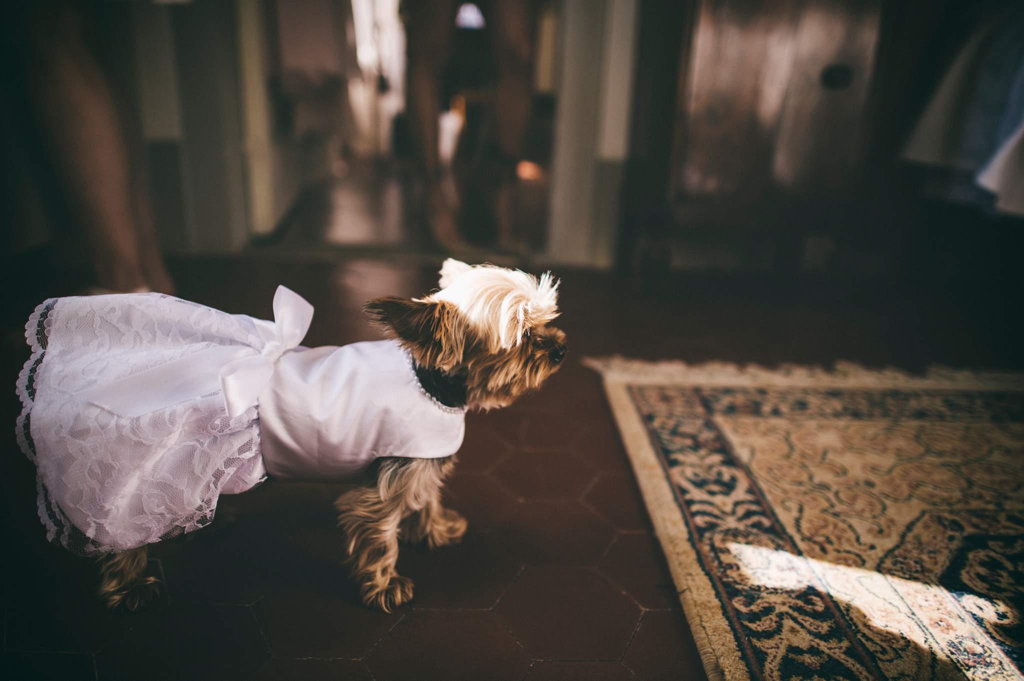 10fotografo-matrimonio-toscana-villa-teresa